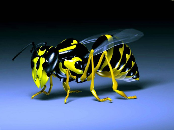 3D Bee Wallpaper - High Quality - 3D Bee Wallpaper