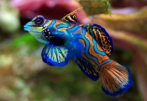 Blue Sea Fish Picture Fish HD Wallpapers - Blue Sea Fish Picture
