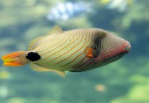 Fish Undersea Fish HD Wallpapers - Fish Undersea