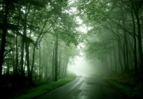 Nature Forest Street Nature HD Wallpapers - Nature Forest Street