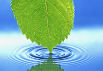 Nature Leaf Water Nature HD Wallpapers - Nature Leaf Water
