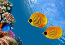 Ocean Fish Wallpapers Fish HD Wallpapers - Ocean Fish Wallpapers