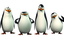 Penguin Cartoon Cartoons HD Wallpapers - Penguin Cartoon