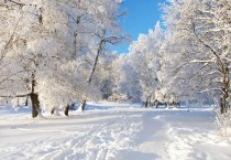White Winter Snow Winter HD Wallpapers - White Winter Snow