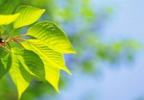 Green Nature Leaf Nature HD Wallpapers - Green Nature Leaf
