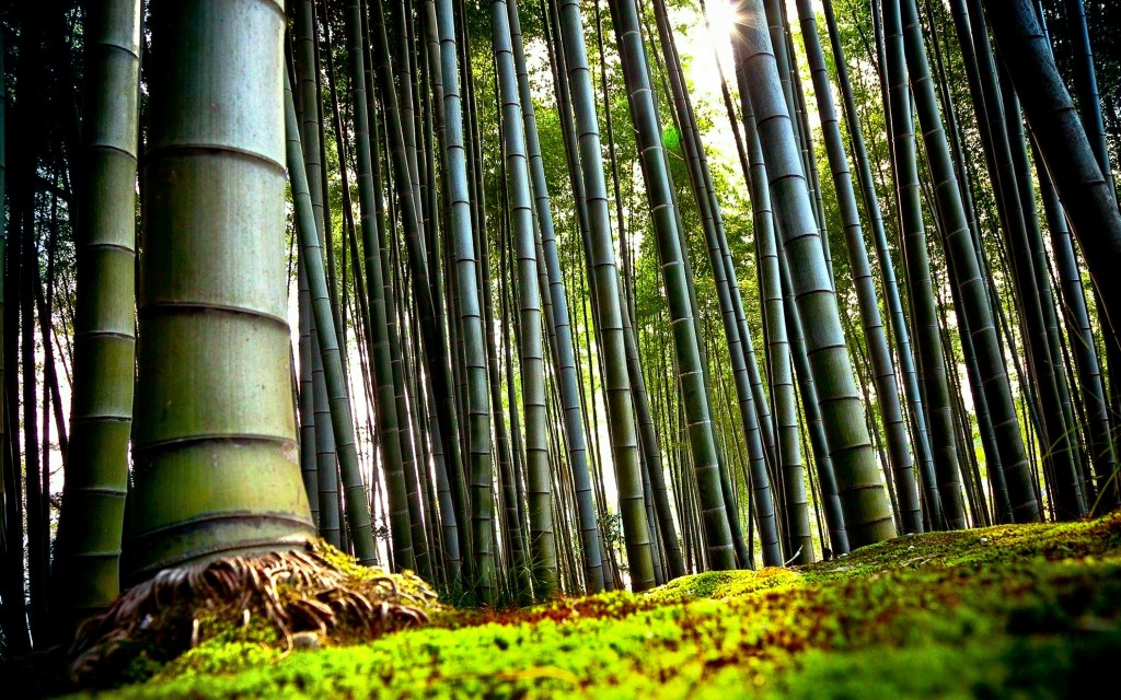 Bamboo Forest HD Wallpapers - Bamboo Forest HD
