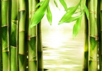Green Bamboo Picture HD Wallpapers - Green Bamboo Picture