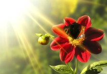 Red Flower Sunlight, HD Wallpapers - Red Flower Sunlight