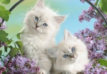 White Cats and Flowers HD Wallpapers - White Cats and Flowers