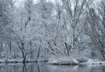Winter Snow Trees Wallpapers HD Wallpapers - Winter Snow Trees Wallpapers
