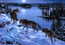 Wolf Winter Wallpapers, HD Wallpapers - Wolf Winter Wallpapers