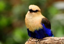 Colorful Bird Background, HD Wallpapers - Colorful Bird Background