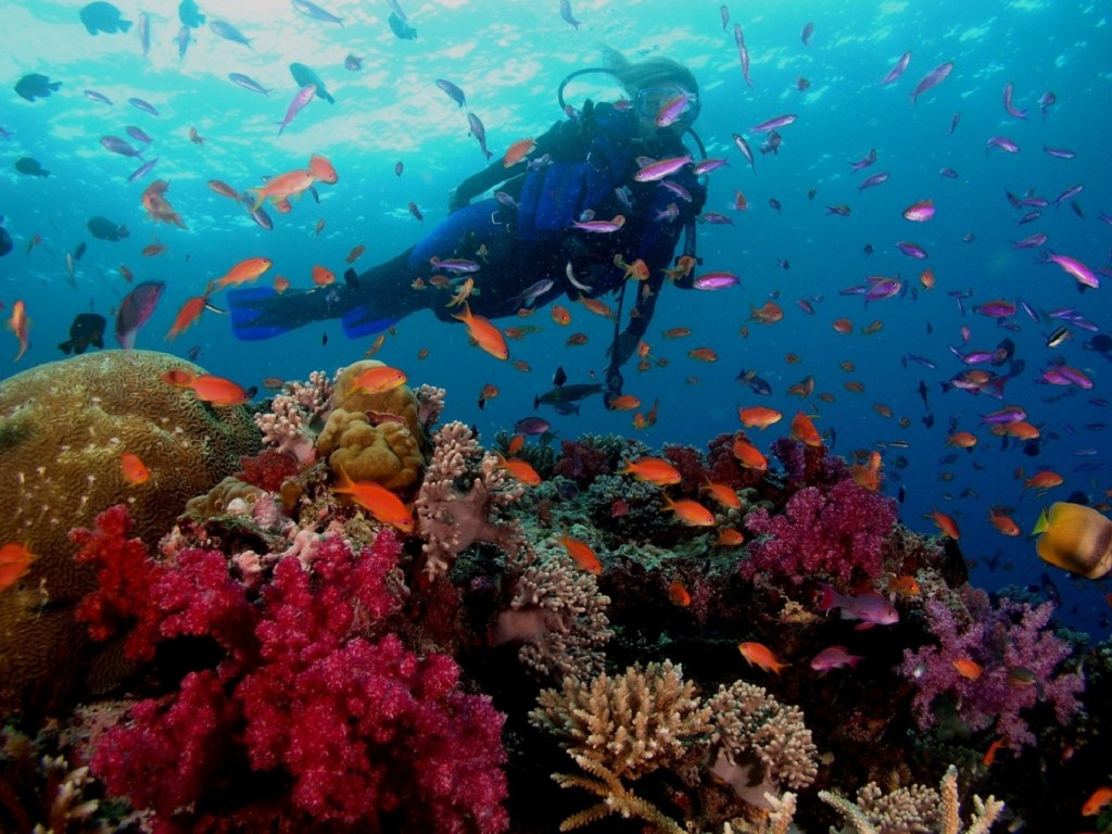 Scuba Diving At Barrier Reef