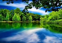Beautiful Green Trees Along Lake
