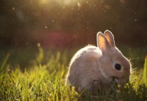 Cute Bunny In Grass HD